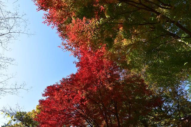 城峰公園の紅葉1