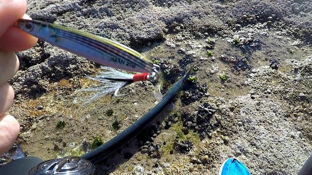 JIG - La pesca del pez aguja con señuelos artificiales