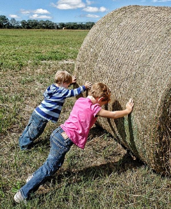 Risultati immagini per disegno legge agricoltura biologica
