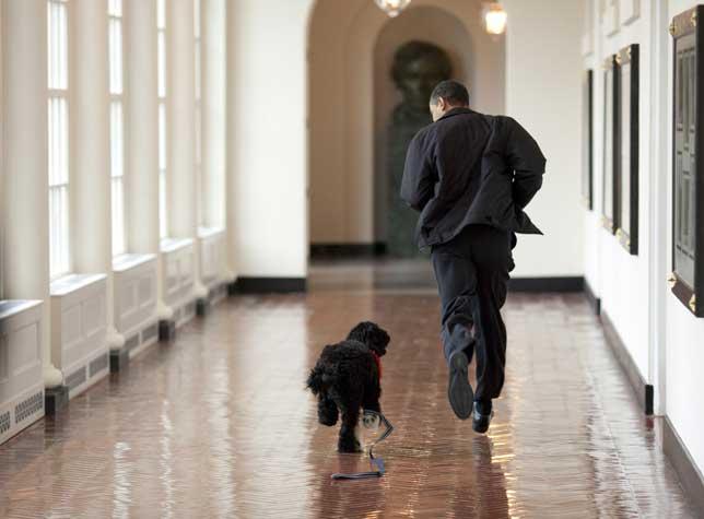 Barack Obama entrenando con su perro Bo para correr el encierro