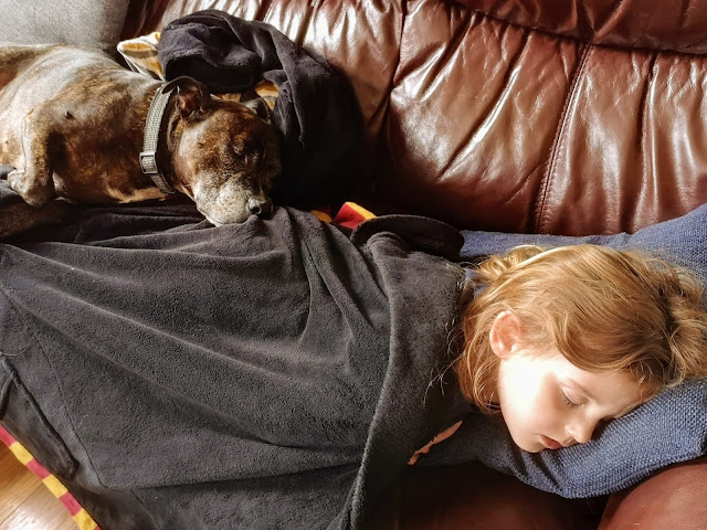 Image of a brindle brown staffordshire bull terrier laid sleeping with a four year old girl that is wrapped up in harry potter gryffindor dressing gown and laid on a brown leather sofa.