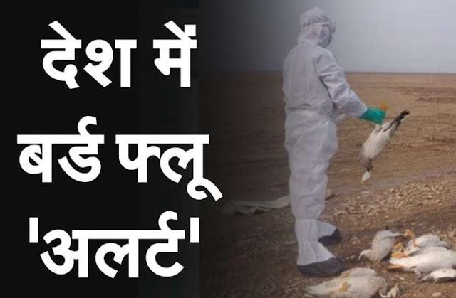 सावधान इंडिया! एक और राज्य में फैला बर्ड फ्लू, सरकार ने जारी किया अलर्ट