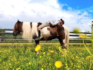 riitta kosonen, riitta reissaa, horsexplore, romania, islanninhevoset