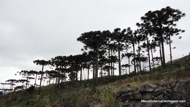 Vista do Mirante das Araucárias - São Joaquim / SC