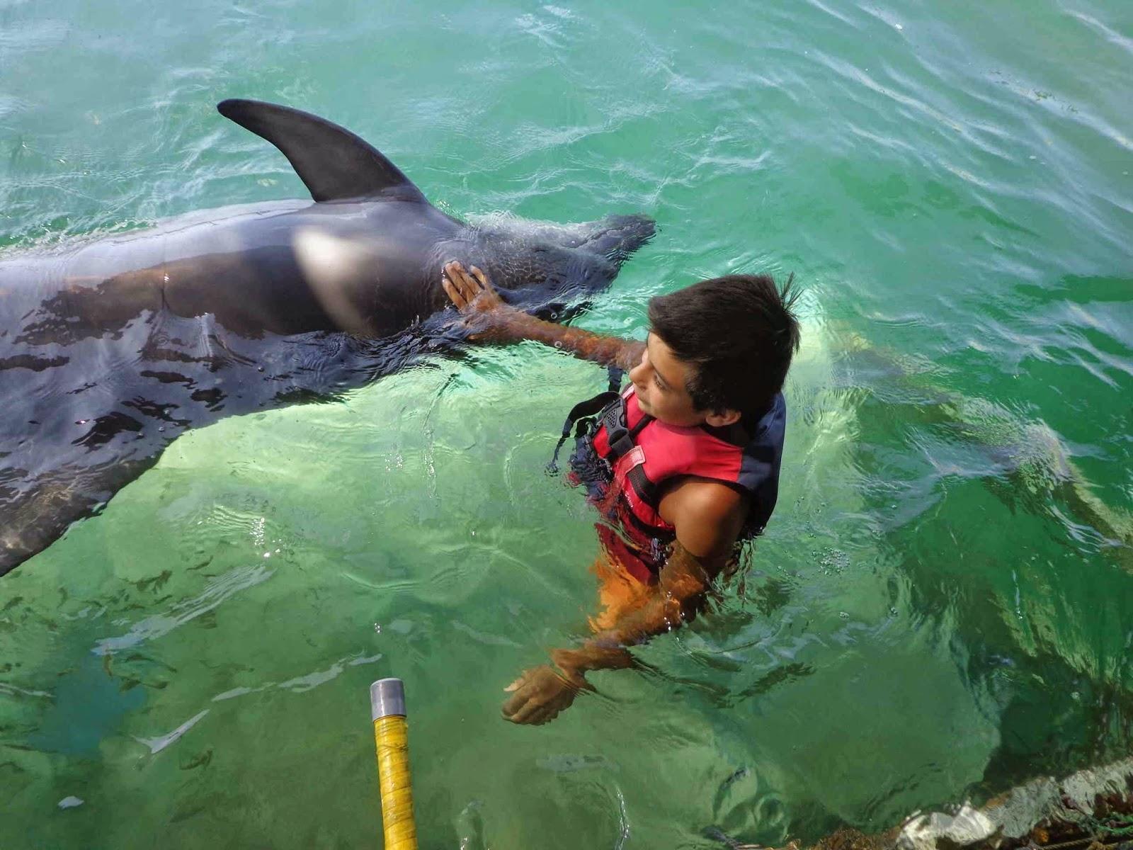 longen van een dolfijn