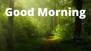 Good morning neture
