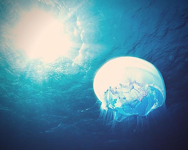 Jellyfish random facts