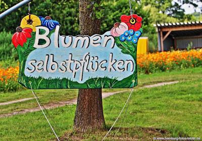 Blumen selber pflücken Hamburg und Umgebung