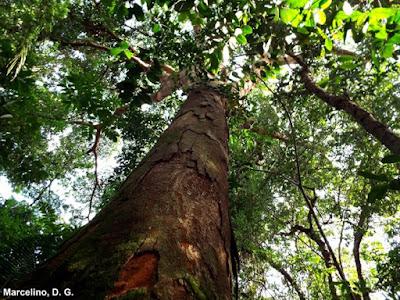 dia da floresta, 21 de março, dia internacional das florestas, meio ambiente, qual o dia da floresta, preservar a floresta, conservação ambiental, preservação florestal, sistema florestal, ecossistema