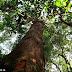 Dia Internacional das Florestas, todos juntos pela preservação ambiental