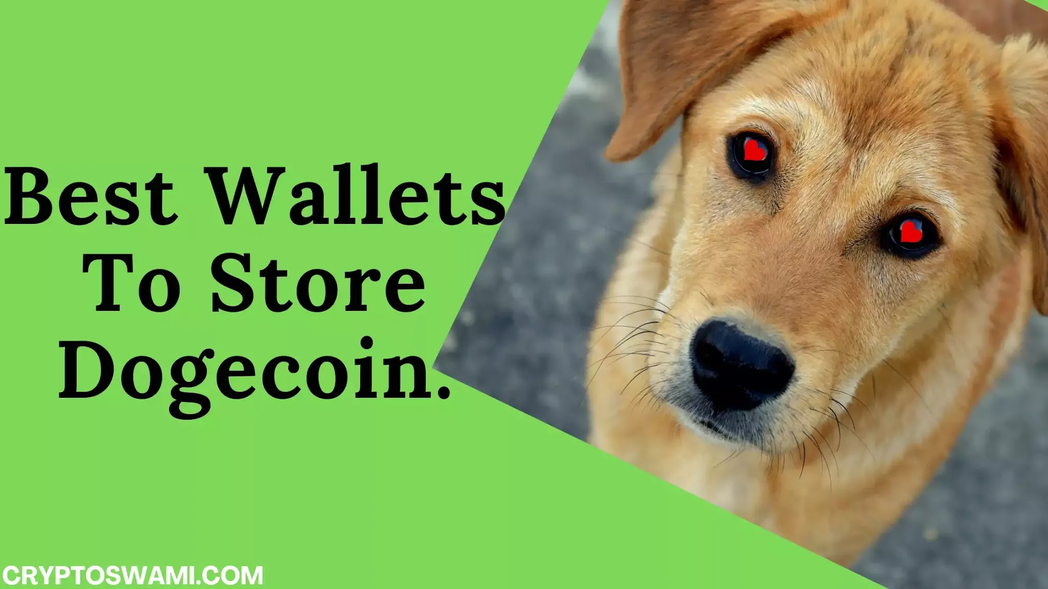 DOGE Wallets - 10 Best Wallet To Store Dogecoin