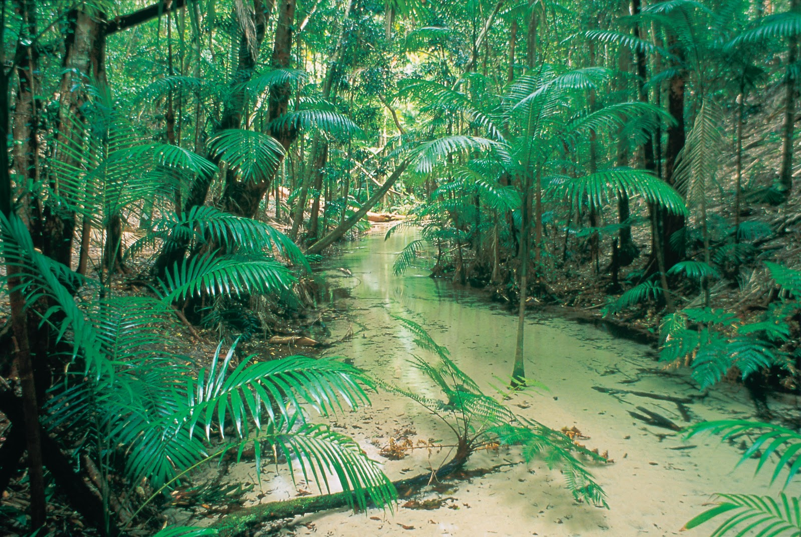 Sunlover Holidays Top 10 Attractions On Fraser Island