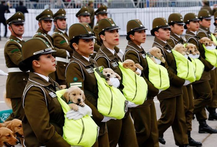Police Chmöm is marching with a golden retriever puppy at the annual parade in Bernardo O'Higgins Park. Santiago, September 20th. Author: