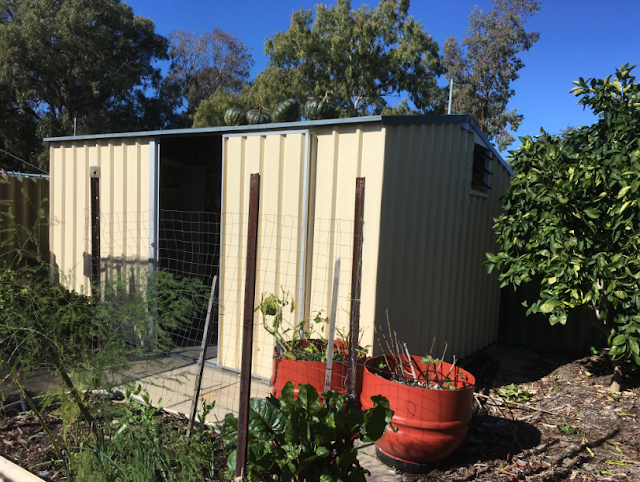 A garden shed in the sunshine