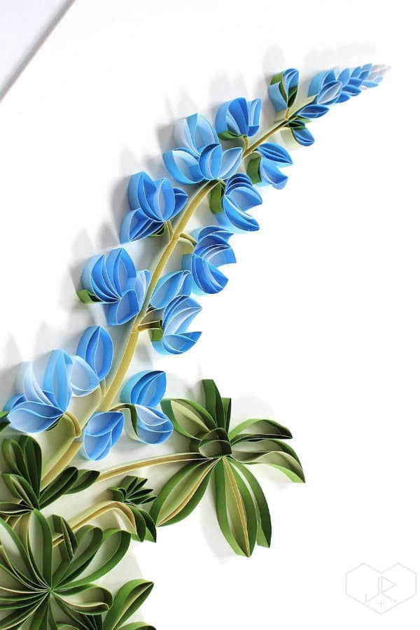 quilled lupine