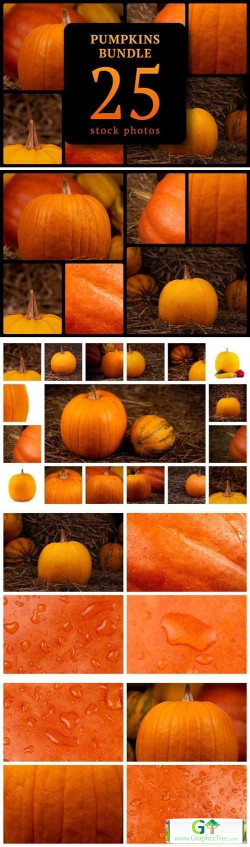 Pumpkins Bundle 25 Stock Photos [Vector] [Fruit & Food & Drink]