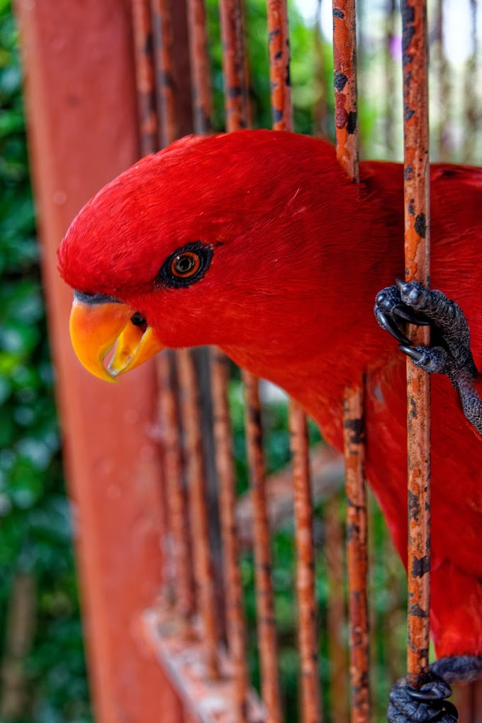The Parrot In The Cage - Four Levels and Question Answers | Lekhanath Poudyal | Mero solution