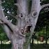 Pohon Paling Mengerikan di Dunia, Menyeramkan Pohon Mengerikan ini!