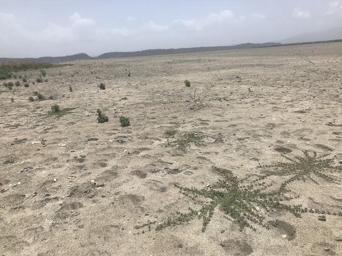 """Carvajal sobre situación laguna Rincón: """"Hay un deterioro acumulado a niveles extremos que ha fragilizado más la zona"""""""