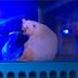 Αντιδράσεις για την πιο θλιμμένη αρκούδα του κόσμου...