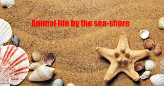 Animal life by the sea-shore
