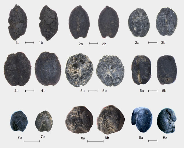 5,200-year-old grains in the eastern Altai Mountains redate trans-Eurasian crop exchange