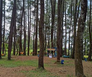 Hutan Pinus ecopark lambar
