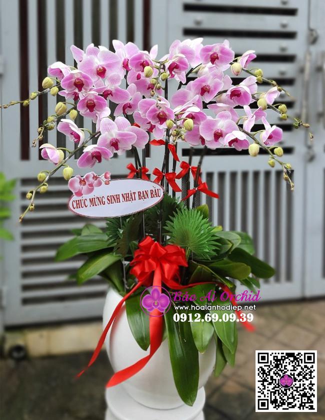 chậu hoa lan hồ điệp hồng phấn 9 cành biếu tết
