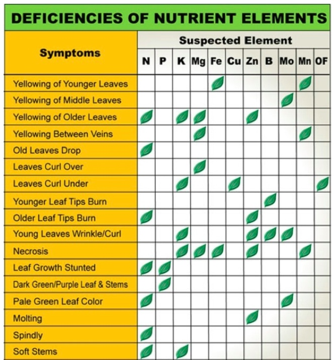 Plant Nutrient Deficiency Leaf Illustrations and Charts