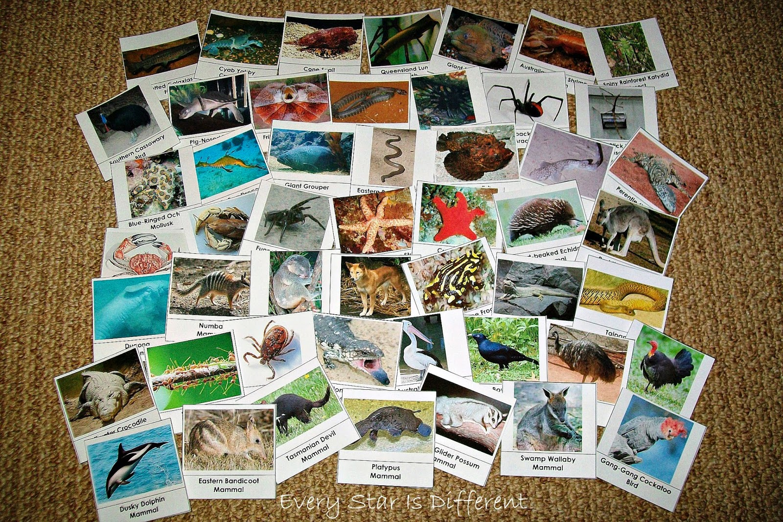 50 Australian Animal Cards (Free Printable)