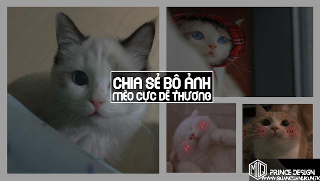 Ảnh Đẹp | Chia sẻ bộ ảnh Mèo cực dễ thương !