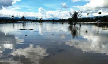 Curah Hujan Tinggi, Sawah Siap Tanam di Tapsel Terendam Banjir