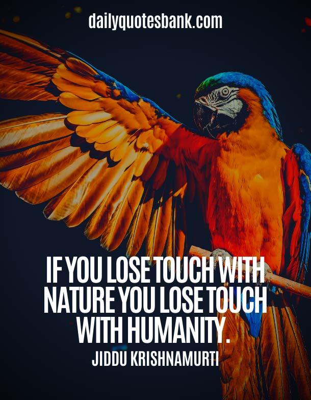 Jiddu Krishnamurti Quotes On Nature