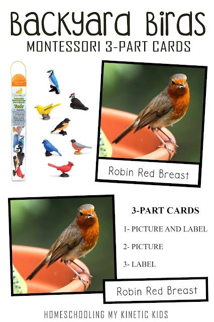Montessori-Inspired Backyard Birds 3-Part Cards to match the Safari LTD toob.  Great for springtime homeschooling and Montessori classroom use.