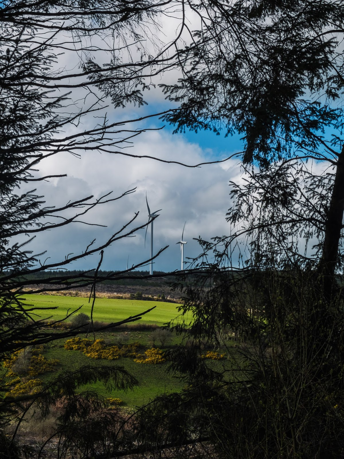 A view of two windmills on top of a hillside through conifer trees in Boggeragh Mountains, North Cork.