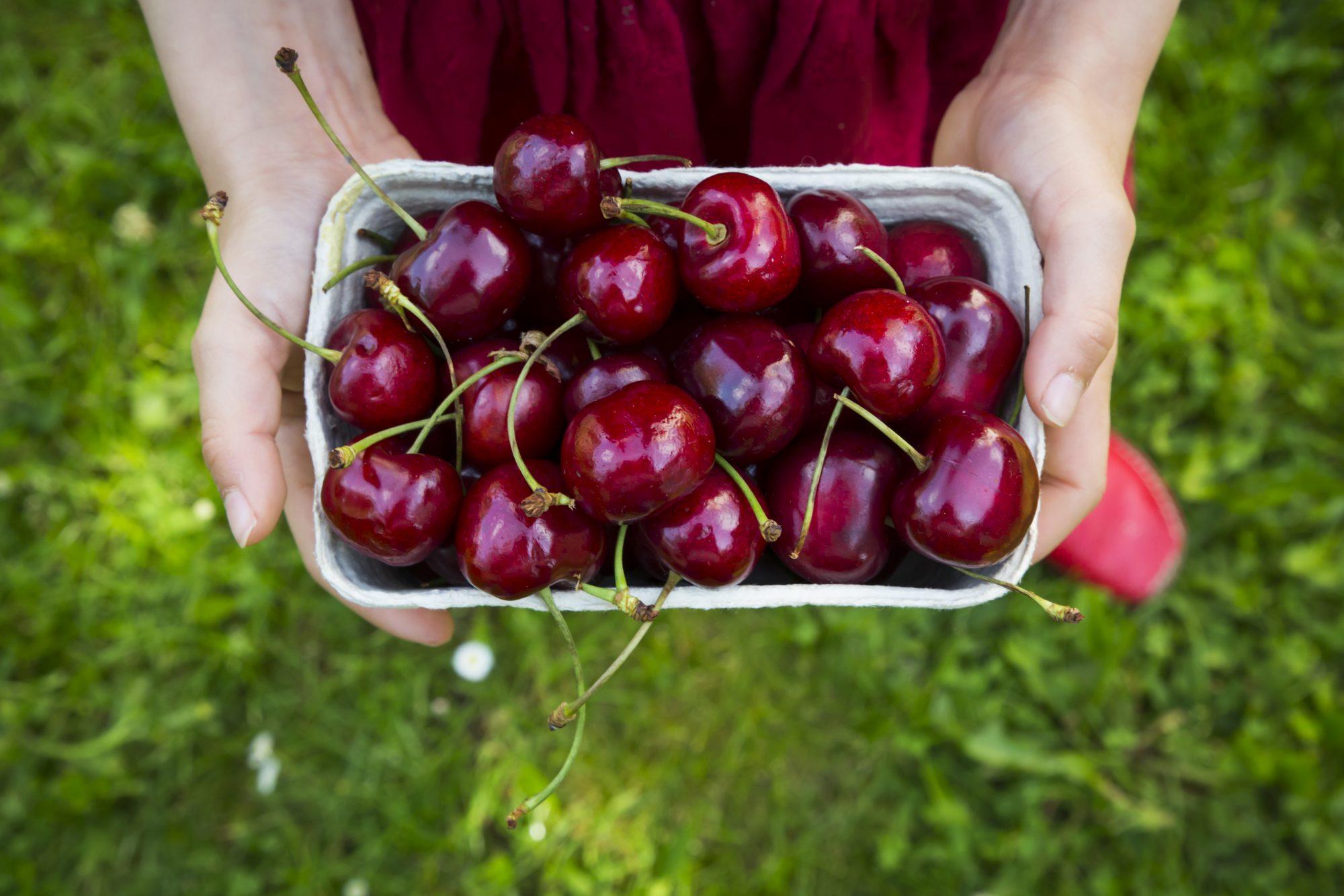 Some Health Benefits of Fruit Cherries