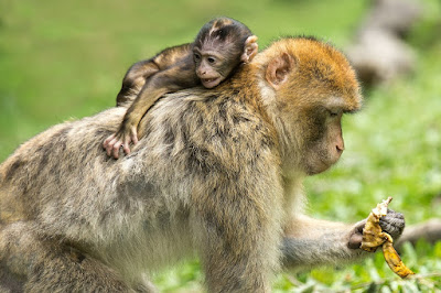 5 Reasons Why Indonesia Is On My Travel Bucket List - Sacred Monkey Sanctuary