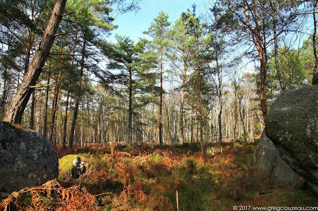 Désert d'Apremont, Forêt de Fontainebleau, Barbizon.