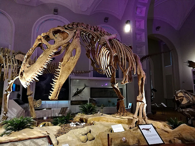 Luomus Helsinki dinosaurus fossiili