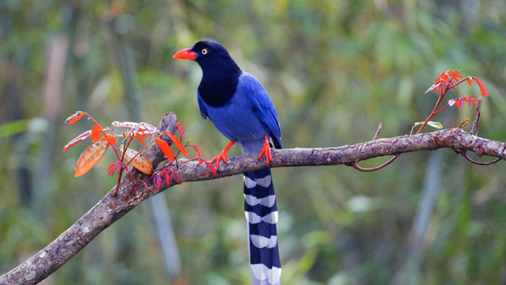 Exotic Birds List Most Amazing That Will Blow Your Mind