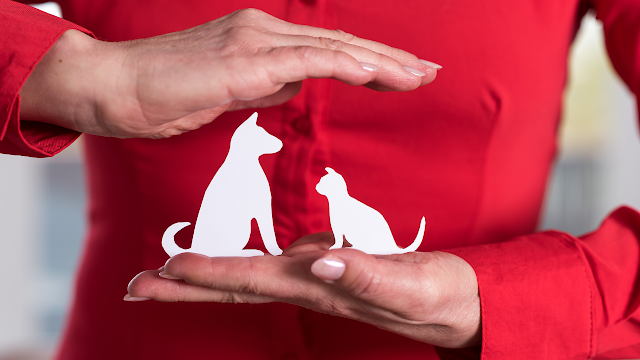 compare pet insurance cat or dog -- How To Choose The Best Pet Insurance For Your Cat Or Dog