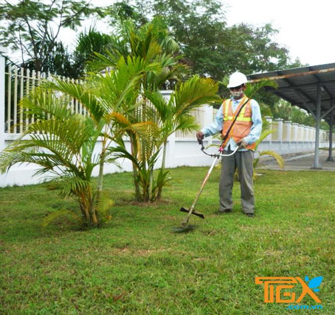 Dịch vụ cắt cỏ tại Trảng Bom