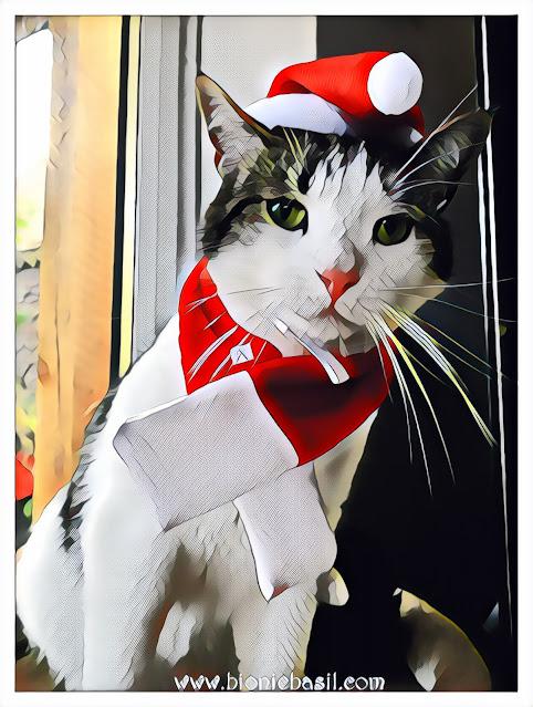 Melvyn's Santa Selfie ©BionicBasil® Caturday Art Hop