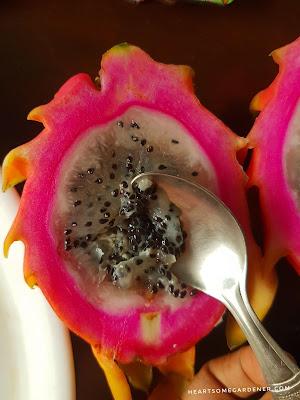 Dragon fruit propagation