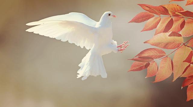 أجمل الطيور البيضاء