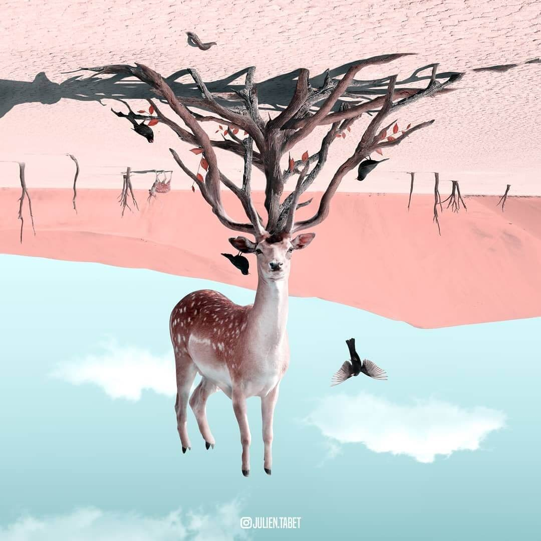 06-Opposites-Julien-Tabet-Surreal-Animal-Photo-Manipulation-www-designstack-co