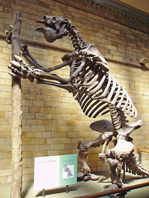 Chile to ask Britain's Natural History Museum to return extinct mammal remains
