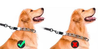 watch 7 Harmful Things You Do to Your Dog Without Realizing It