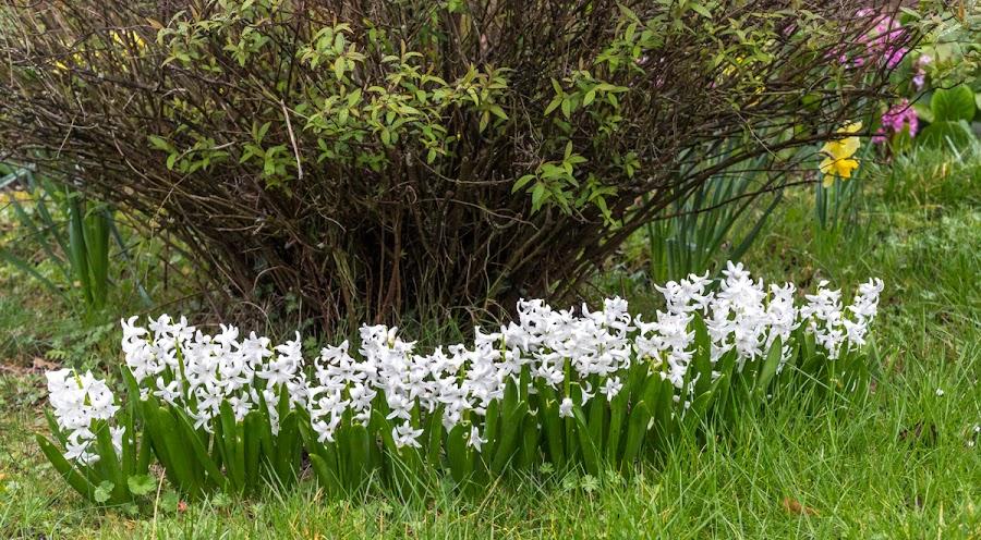 Hi ya, hyacinth!