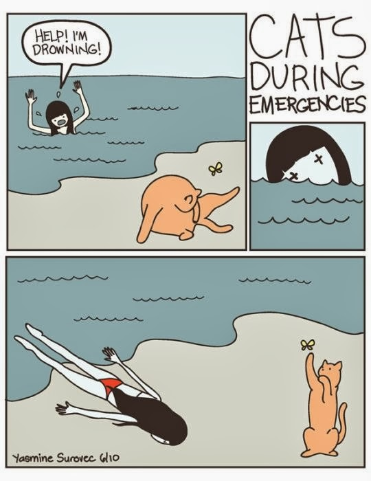 Funny cat during drowning joke cartoon picture - ignores woman shouting for help